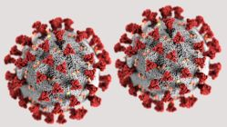 SARS-CoV-2 (neuartiges Coronavirus), Abbildung des Centers for Disease Control and Prevention (CDC)
