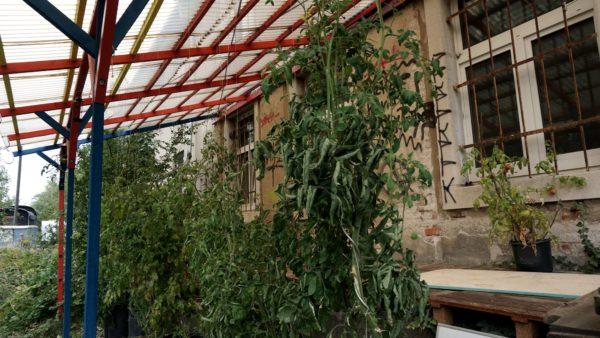 Die Pflanzen im selbst angelegten Garten gedeihen prächtig.