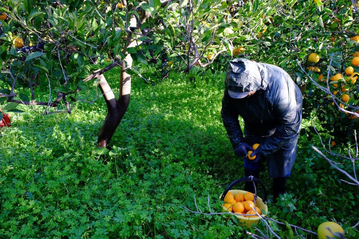 Il costo morale di un chilo d'arance