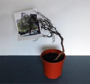 6,999 German Oaks & 1 American Sycamore (Pot Plant Edition) // Plant Pot, Soil, Wooden Branch, Printed Image // 50 x 50 x 30 cm // 2005