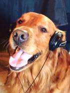 Bean listening in headphones