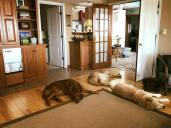 Bean, Q & Trooper sleeping in the lounge