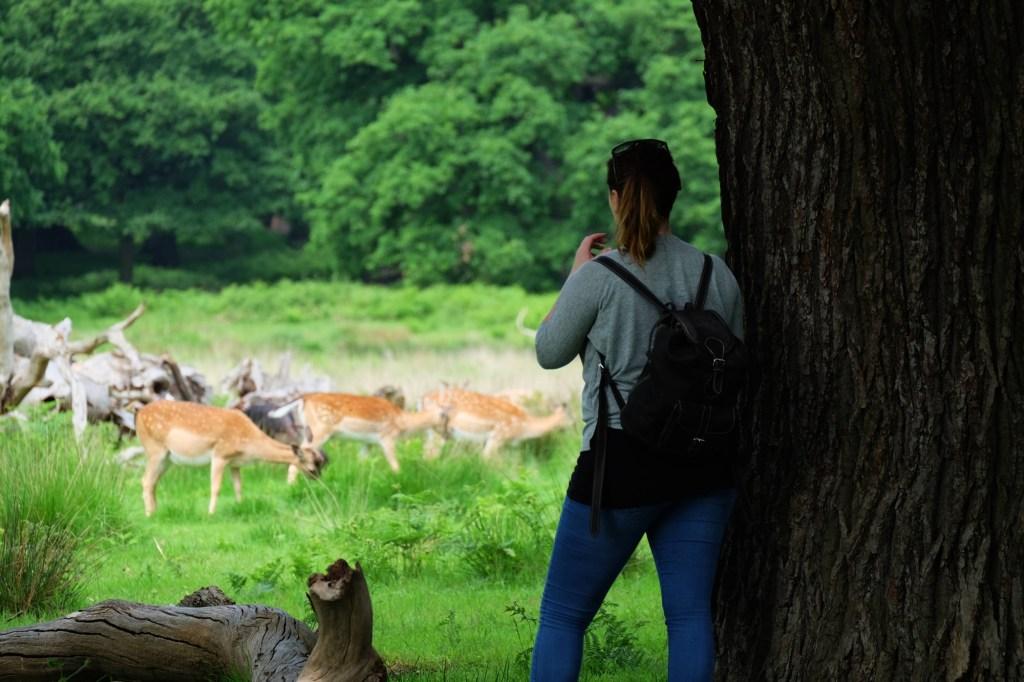 Richmond Park London - Siobhan looking for deer under tree