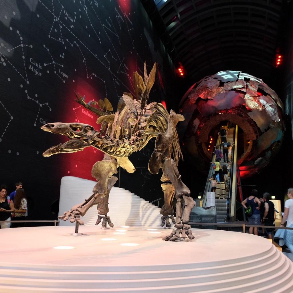 Sophie the Stegosaurus at Natural history Museum