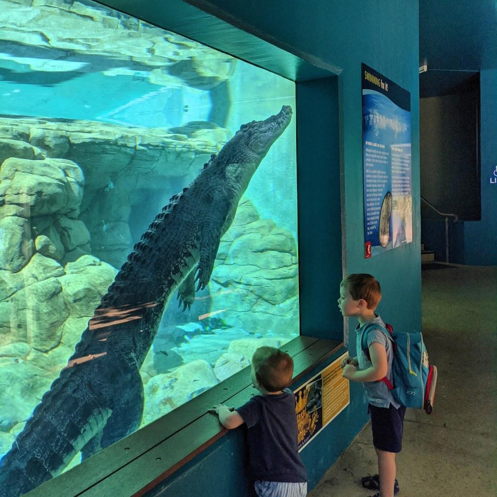 Two children watch a crocodile in an aquarium at Darwin's Crocosauras Cove