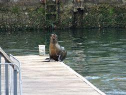 Sea Lion Observation