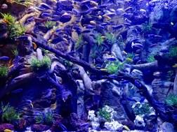 Loro Parque Aquarium, Artificial Habitat