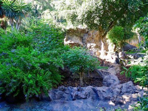 Loro Parque - Gorilla