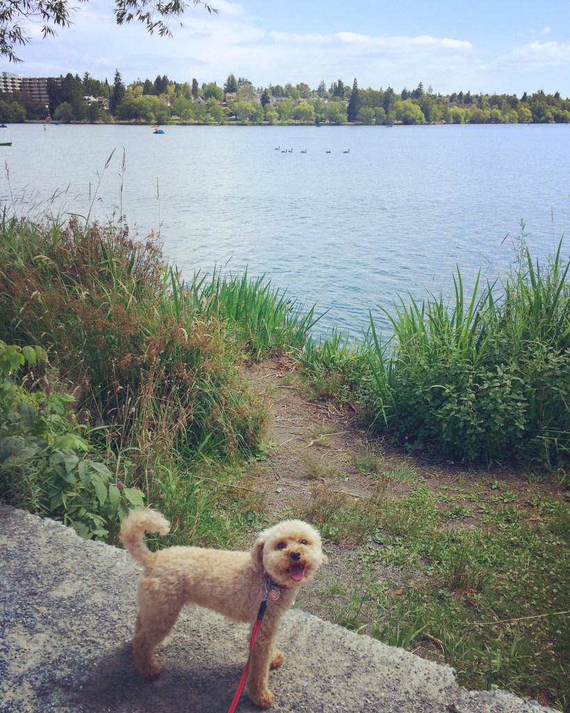 Greenlake adventures with my buddy
