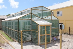 The green house at the Charlestown Secondary School