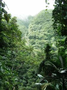 The Central Forest Reserve in St. Kitts encompasses all the lands above the 1000 feet contour.