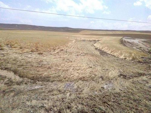 Nevşehir'de 143 Bin Dekar Ekili alan zarar gördü. Hasar tespit çalışmaları devam ediyor.