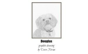 Douglas Drawing by Dave Nevue