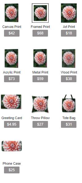 Dihilia Flower - Soft Pink Tones