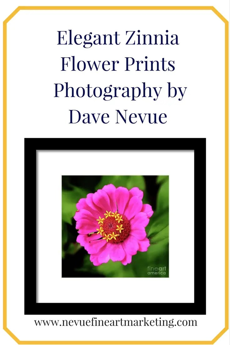 Elegant Zinnia Flower Prints - Photography by Dave Nevue. Purchase prints and greeting cards.