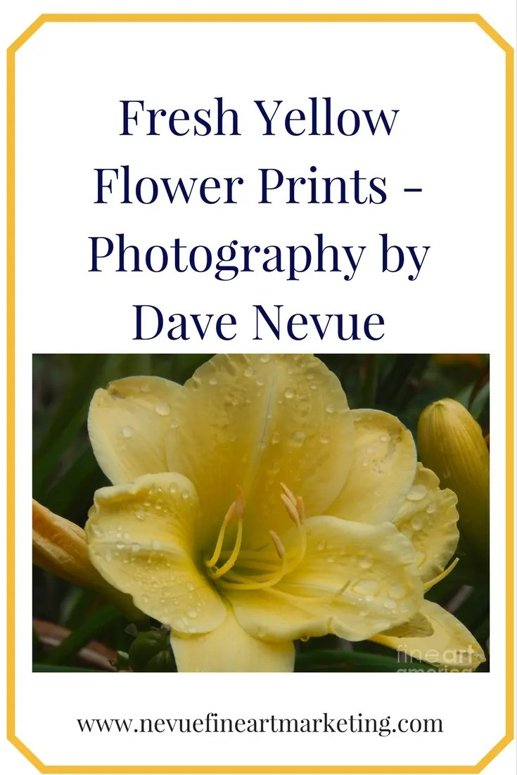 Fresh Yellow Flower Prints - Photography by Dave Nevue
