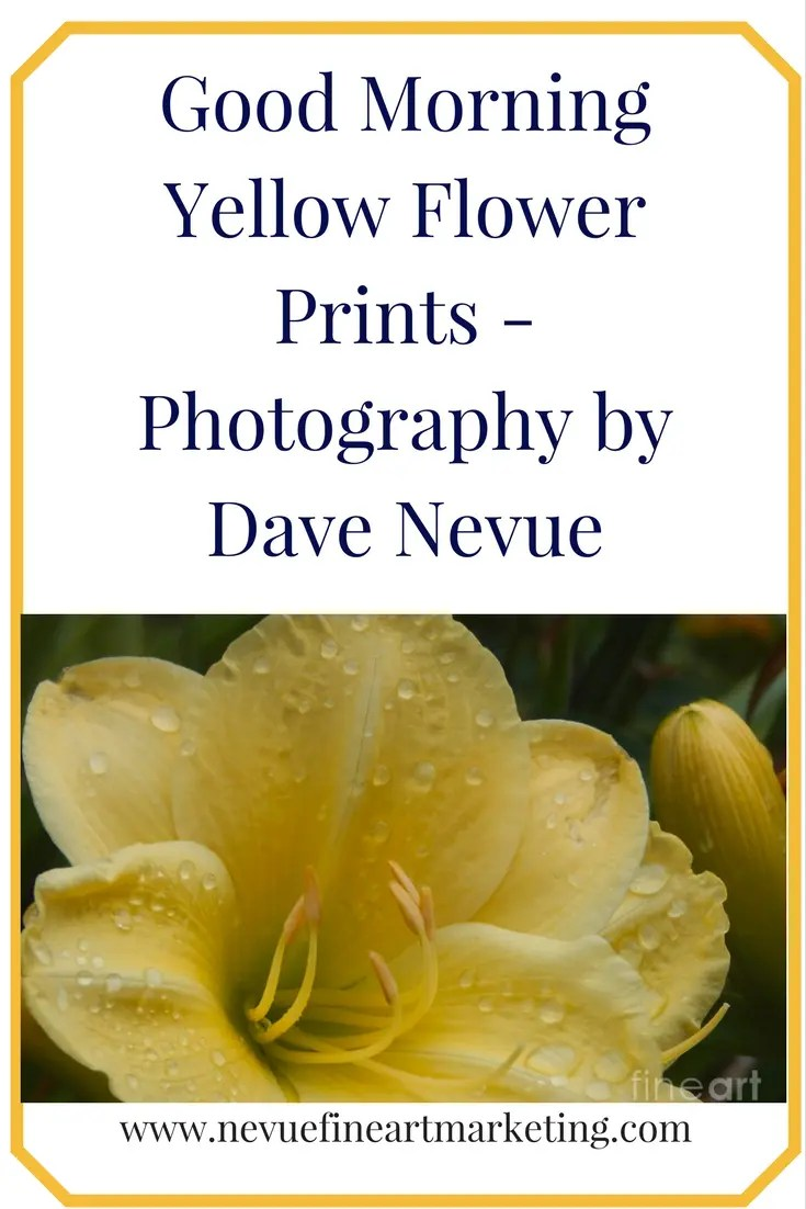 Good Morning Yellow Flower Prints - Photography by Dave Nevue. Purchase prints and Greeting cards.