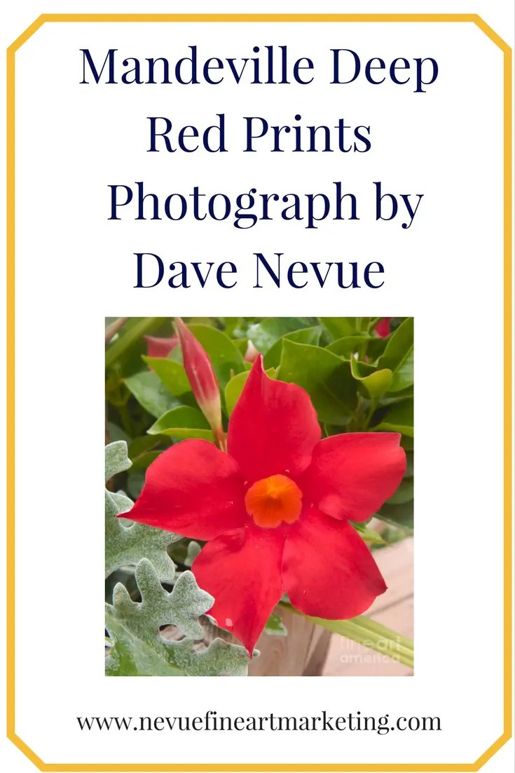 Mandeville Deep Red Prints. Purchase art prints, canvas prints, framed prints, greeting cards and more. Reference images for visual artists.