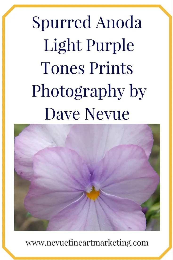 Spurred Anoda - Light Purple Tones Prints - Photography by Dave Nevue. Purchase prints. Reference images for artists.