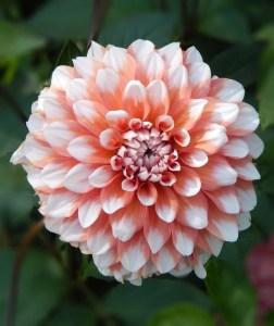 flower referrance image