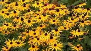 flower referance
