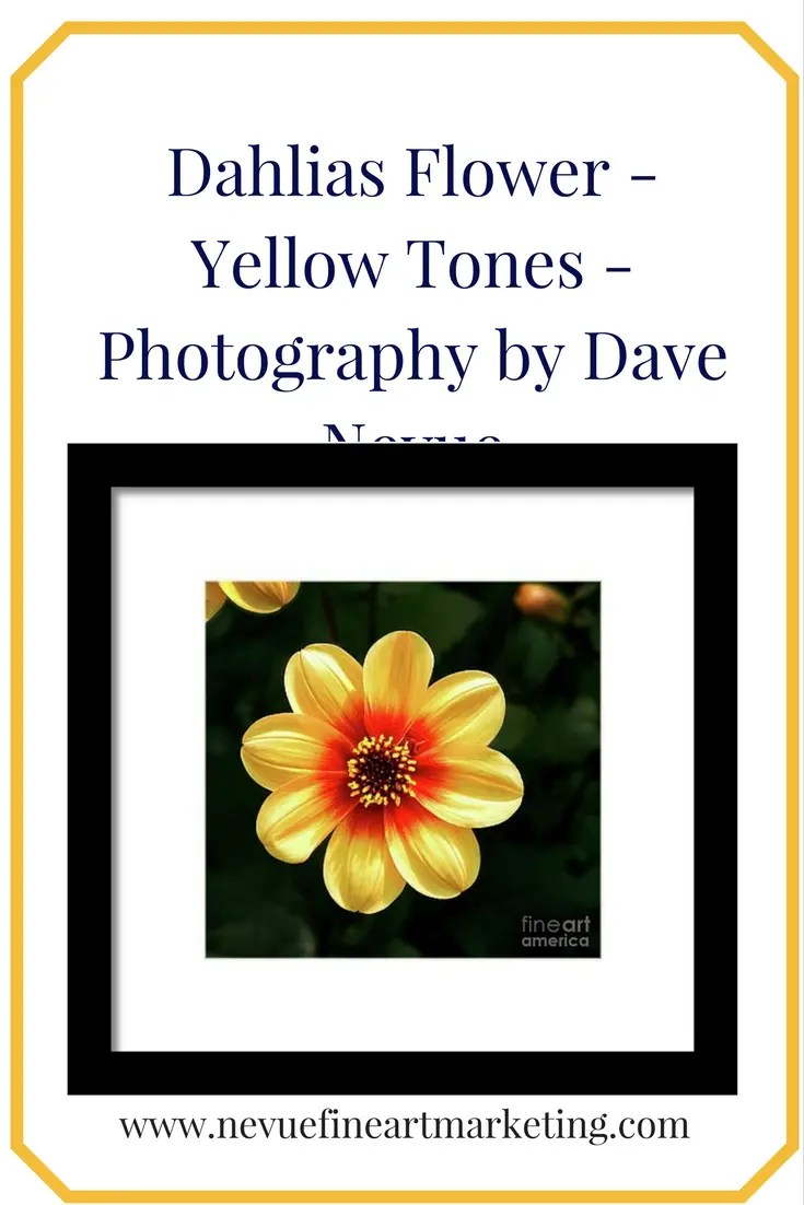 Dahlias Flower - Yellow Tones - Photograph by Dave Nevue