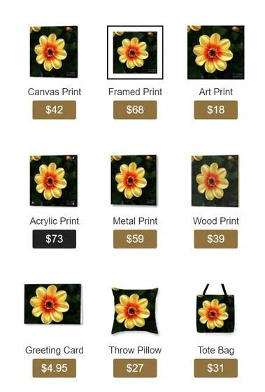 Dahlias Flower - Yellow Tones