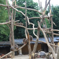 17-06-2015_Tierbilder_Augsburger-Zoo_Poeppel_new-facts-eu0006