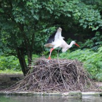 17-06-2015_Tierbilder_Augsburger-Zoo_Poeppel_new-facts-eu0038