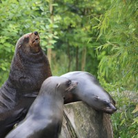 17-06-2015_Tierbilder_Augsburger-Zoo_Poeppel_new-facts-eu0115
