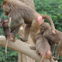17-06-2015_Tierbilder_Augsburger-Zoo_Poeppel_new-facts-eu0144