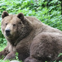 17-06-2015_Tierbilder_Augsburger-Zoo_Poeppel_new-facts-eu0190
