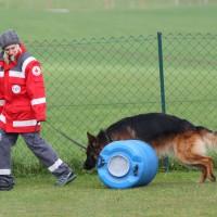 31-10-2015_Bayern_Oberallgaeu_BRK_Rettungshundestaffel_Eignungstest_Kuehnl_new-facts-eu039