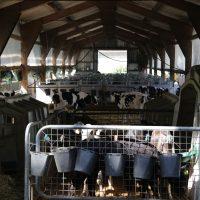 2019-08-09_Unterallgaeu_Groenenach-Tal_Miclhbetrieb_Landwirtschaft_Tierschutz_Polizei_Durchsuchung_Poeppel_0015