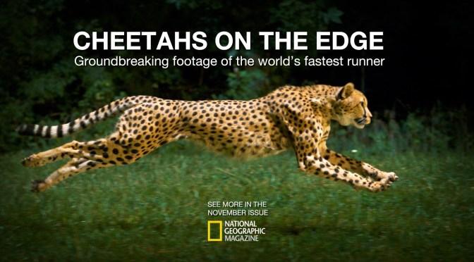 Cheetahs on the Edge by Greg Wilson