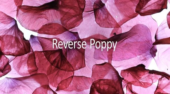 Reverse Poppy by Wim Goossens