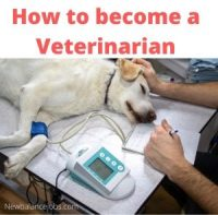 How to become a Veterinarian