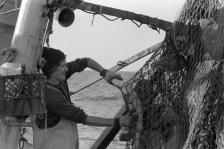 "Paul Hirth, fisherman aboard the ""Christina J,"" wrestles ""shack"" fish from the net. Photo by Joseph Thomas"