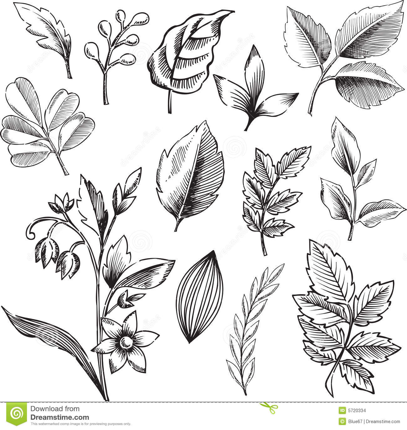 19 White Leaf And Black Graphics Vector Images