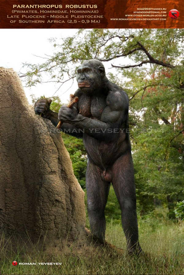 Paranthropus Facts And Pictures
