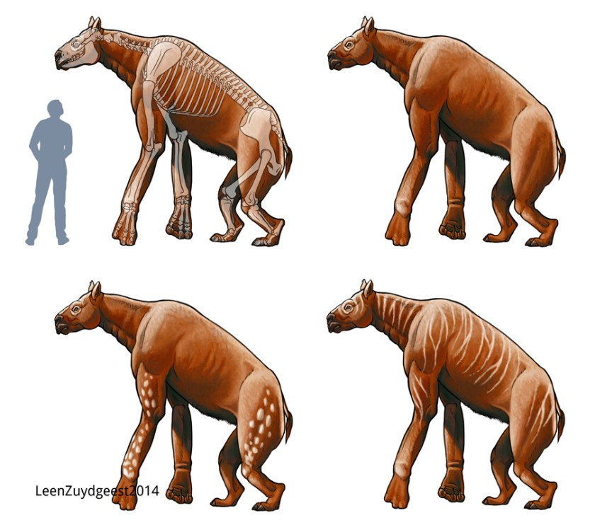 Image result for Chalicotherium