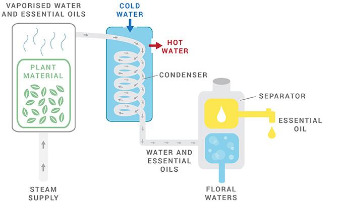 steam-distillation