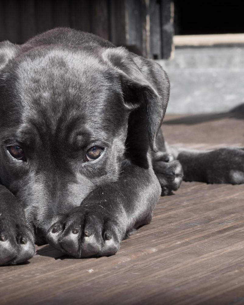 Vet Tips for Dogs if Your Dog is Afraid of Going to the Vets