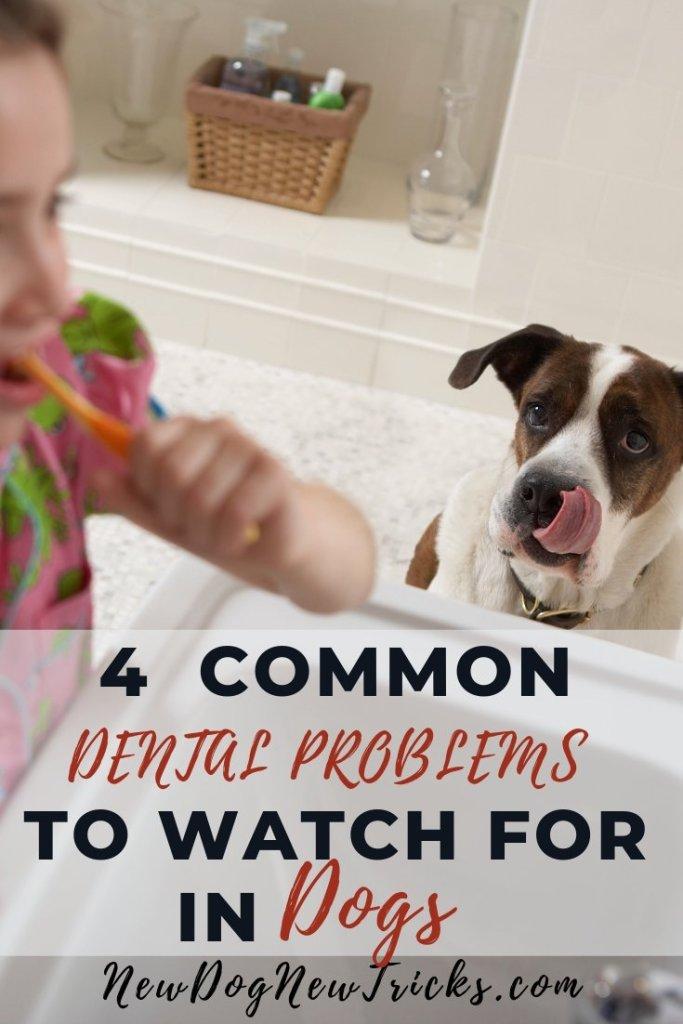 Dog Teeth - dog watching a child brushing their teeth