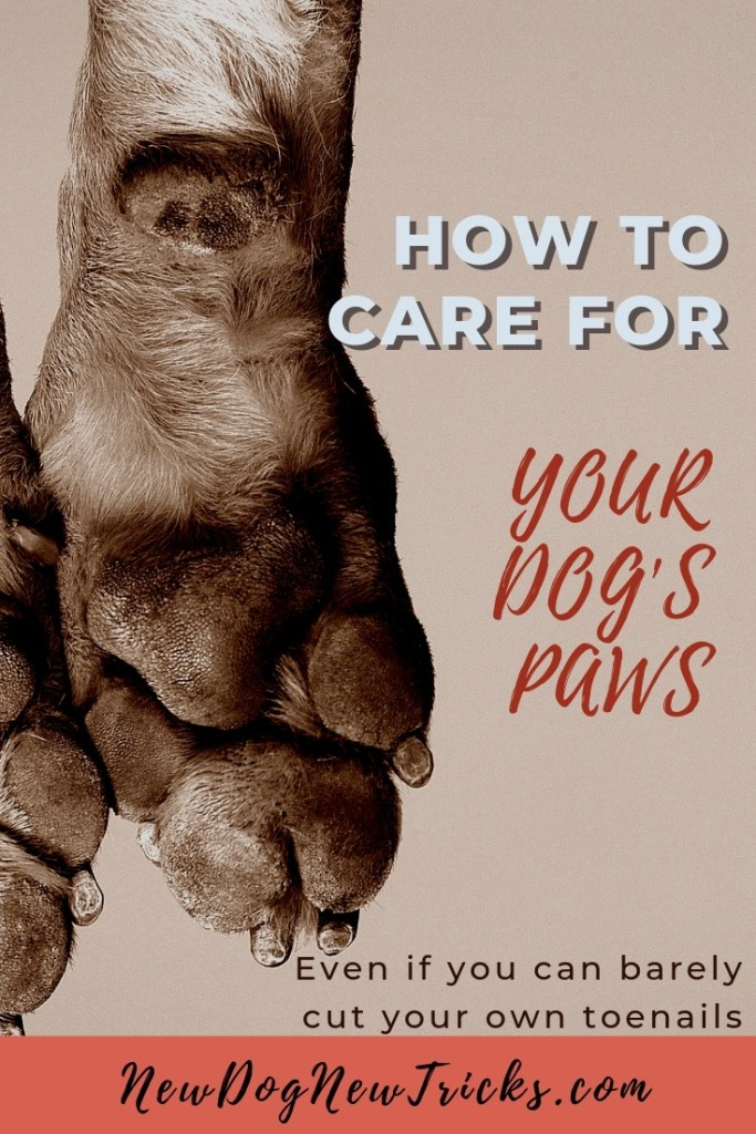How to Care for Dog's Paws