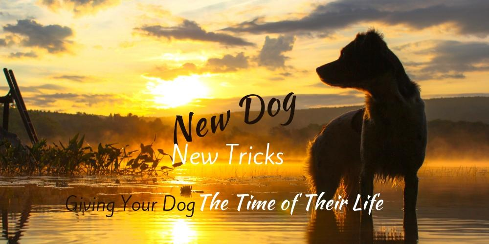New Dog New Tricks