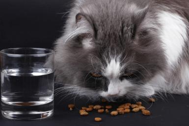 feeding kitten