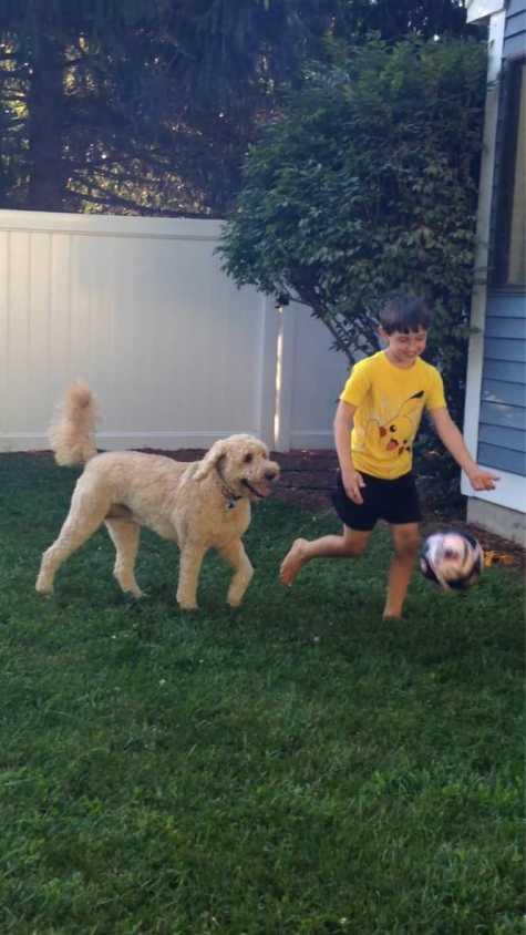 Our Goldendoodle, Millie playing soccer with Dylan