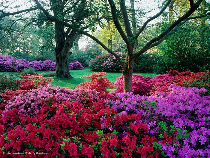 Exbury Gardens New Forest Attractions