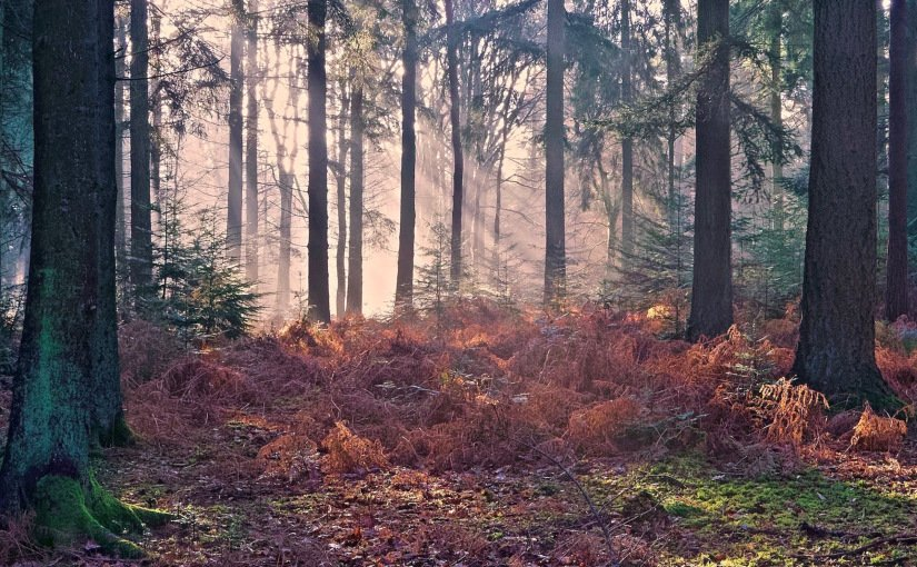 Things to do, walking and cycling routes and events, as well as our planning service and conservation work. New Forest Sounds Clive S Sound Workshop New Forest National Park Authority